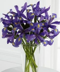 irises blue etc