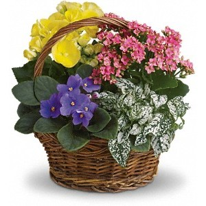 Flowering Planter Basket