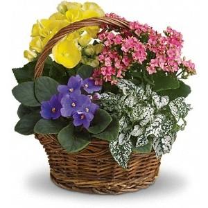 Flowering Planter Basket