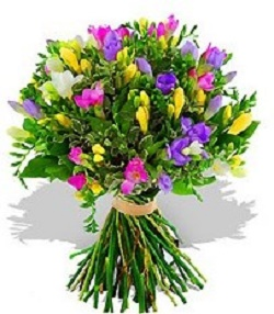 Freesias Only